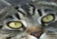 Profile picture of obuheqyr